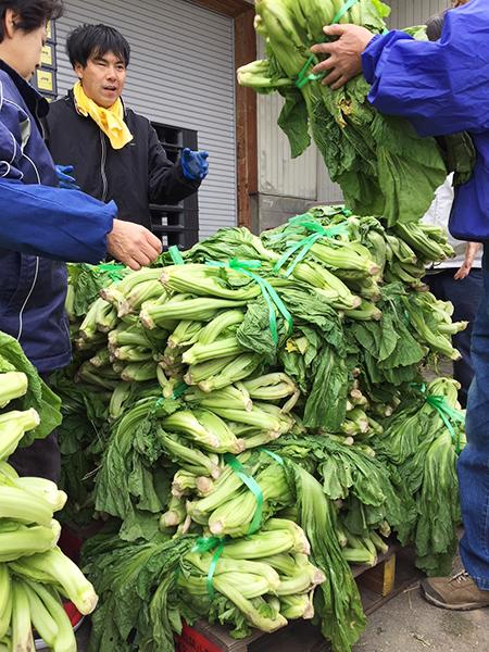 青菜収穫の様子 その7