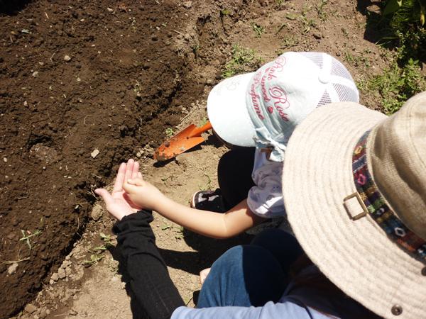 枝豆の種を植える様子